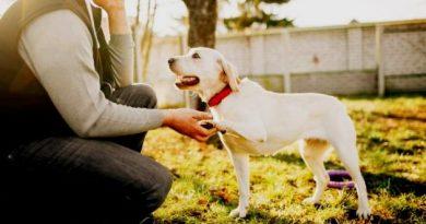 Adestrar seu cão é pratico e não tem segredo.