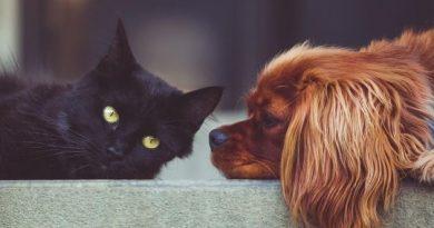 Campanha do Floripa Shopping ajuda na castração de pets.