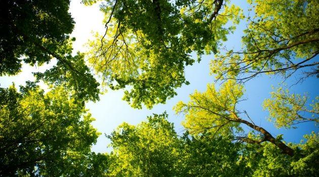 Listamos 4 árvores ideais e seus benefícios para área urbana.