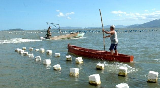 Governo interdita cultivo e venda de moluscos em algumas regiões.