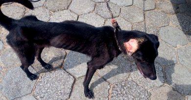 Dibea resgata dois cachorros vítimas de maus-tratos em Florianópolis