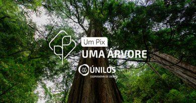 7 mil mudas nativas serão plantadas na Grande Florianópolis