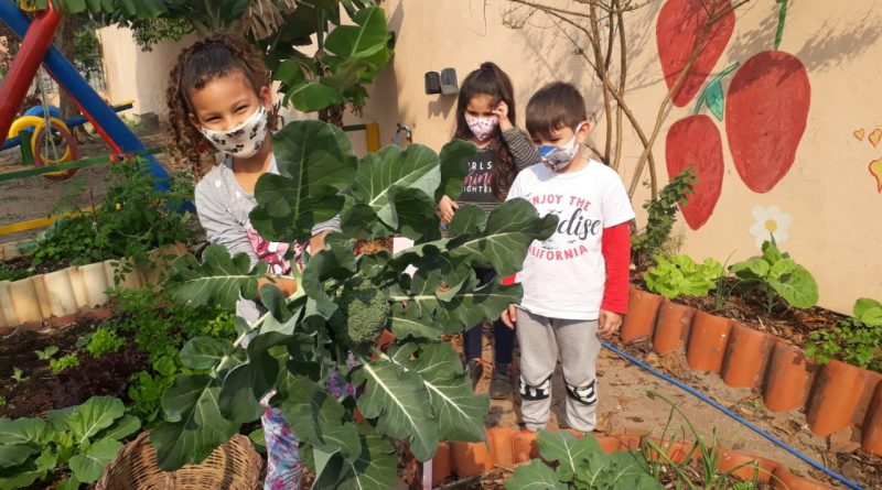 Criançada planta e colhe em creche da rede municipal da Capital